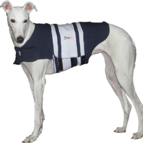 Pet Trends: Thundershirt Quells Doggie Panic