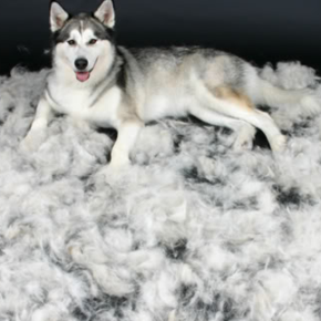 Pet Trends: Pet Hair Taking Over? Don't Hate; FURminate