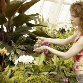 Gardening in the Winter: The Greenhouse Alternative