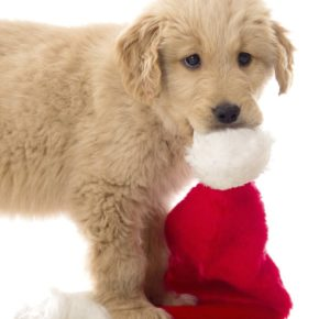 A Happy Dog for Christmas: Top 5 Tastiest, Healthiest & Most Creative Treats