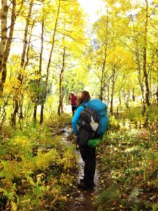 Hiking thru Aspens