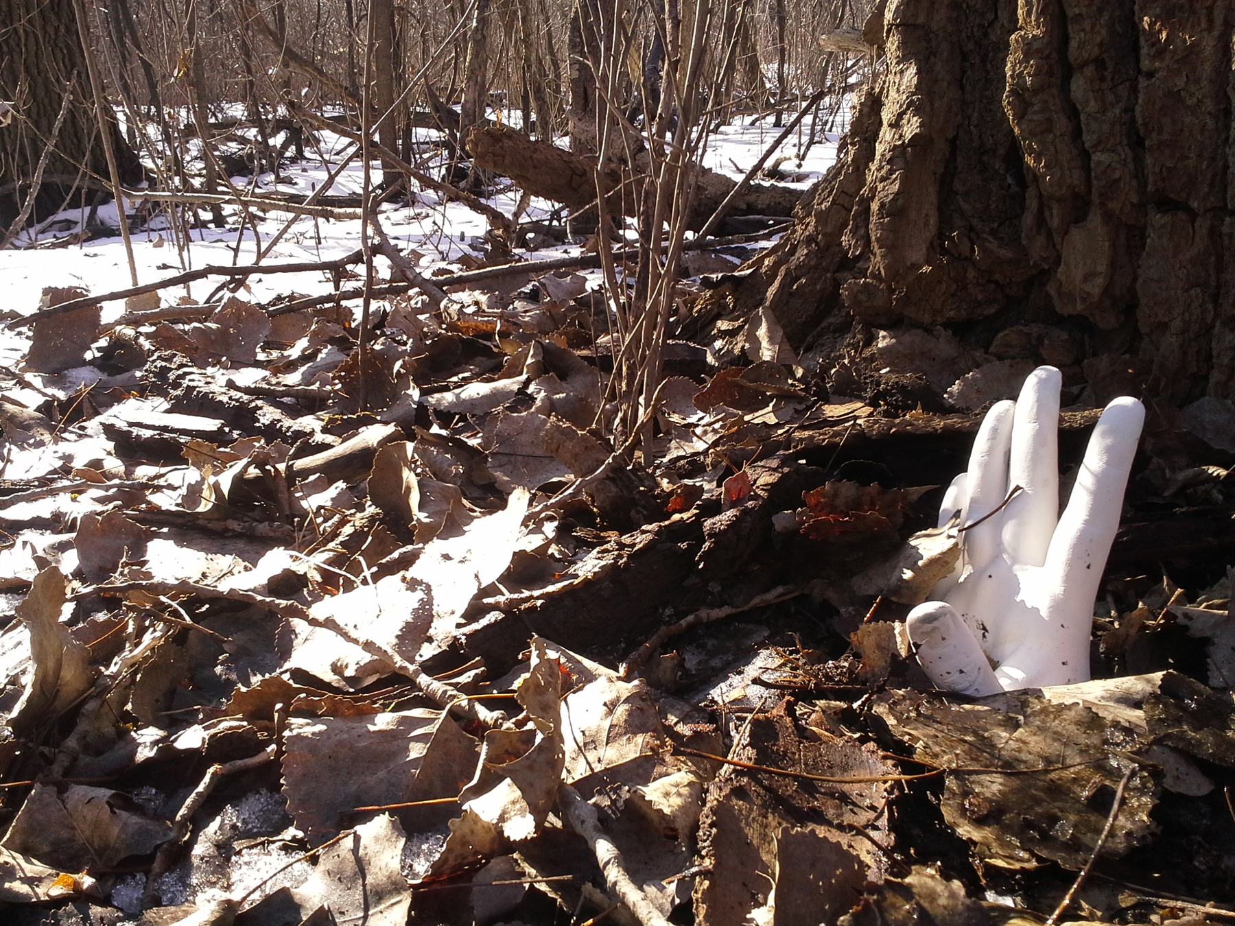 A hand reaches heavenward in The Winterbourne Woods outside of Chicago. Image courtesy of The Impossible Winterbourne.