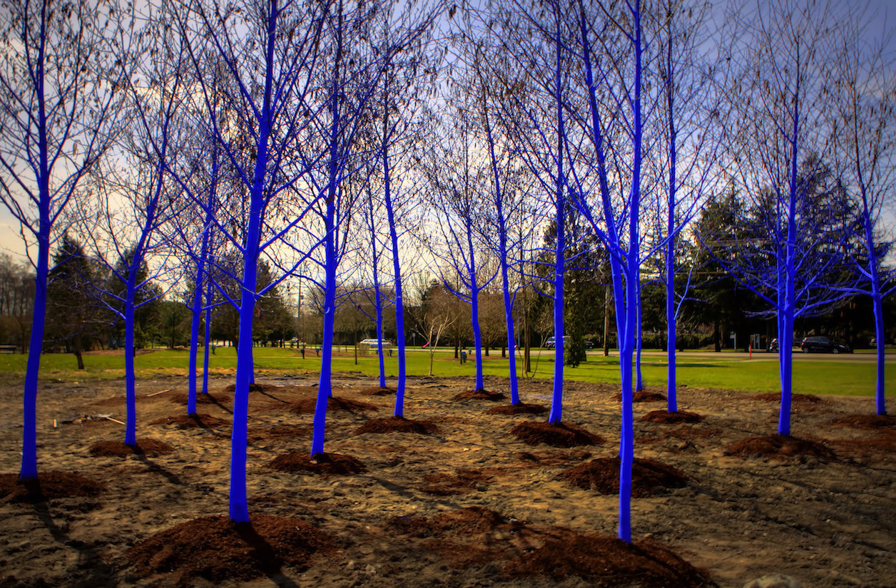 The Blue Trees, Konstantin Dimopoulos, Cori Anderson, 303 Magazine, Downtown Denver