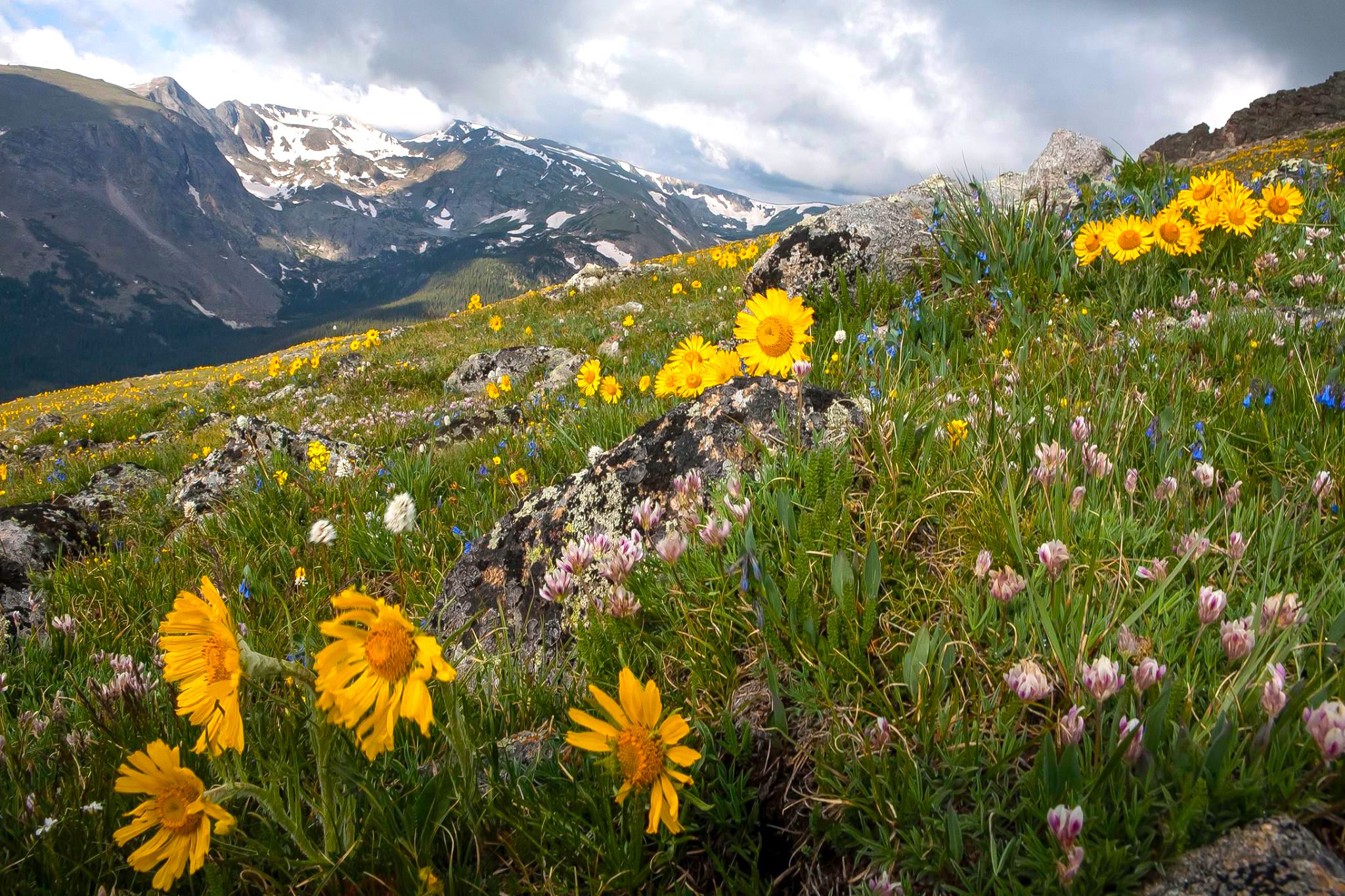 11 Best Hikes To See Wildflowers This Spring And Summer 303 Magazine