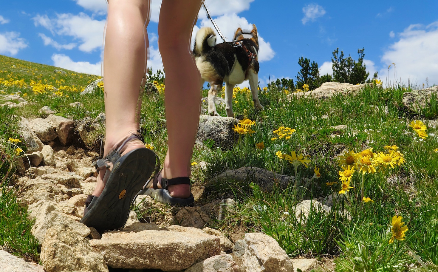 dog hiking colorado, Cori Anderson, 303 Magazine
